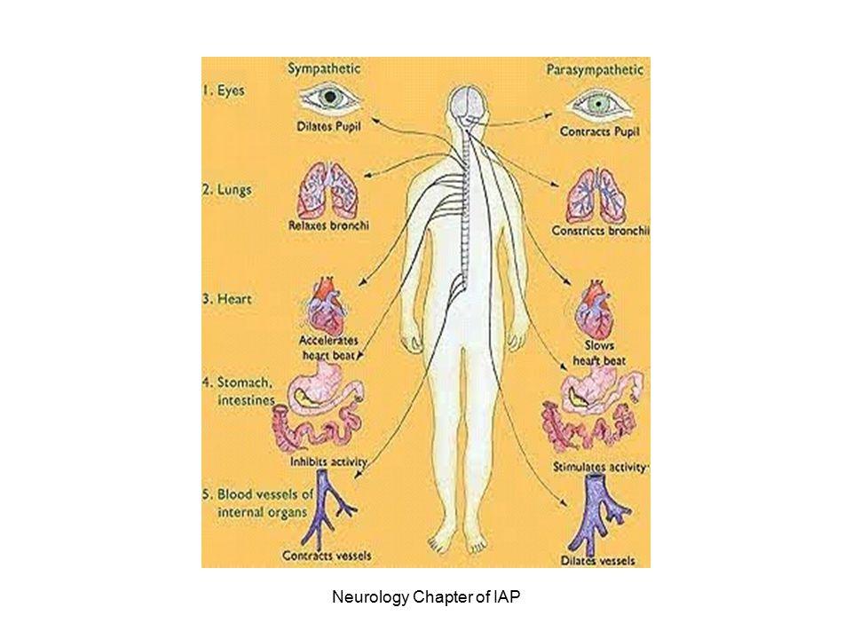 Neurology Chapter of IAP