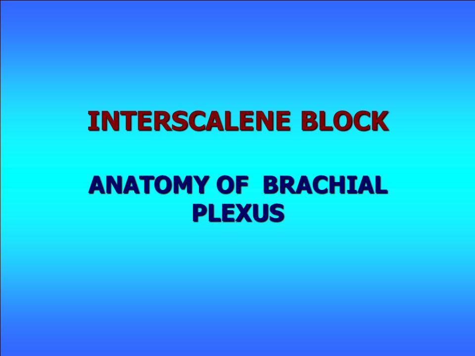 INTERSCALENE BLOCK ANATOMY OF BRACHIAL PLEXUS