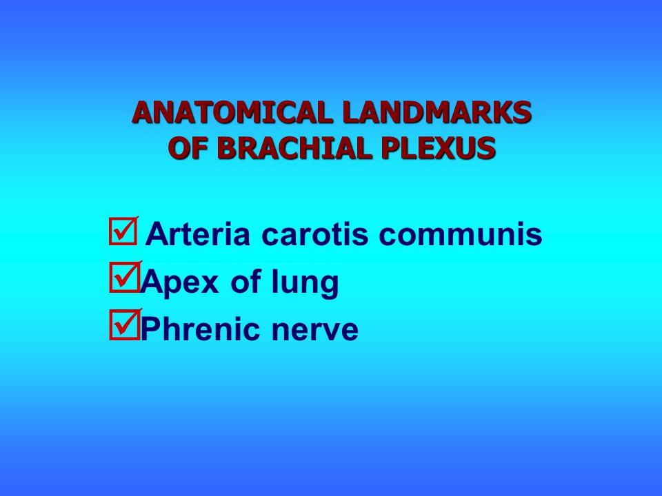 ANATOMICAL LANDMARKS OF BRACHIAL PLEXUS  Arteria carotis communis  Apex of lung  Phrenic nerve