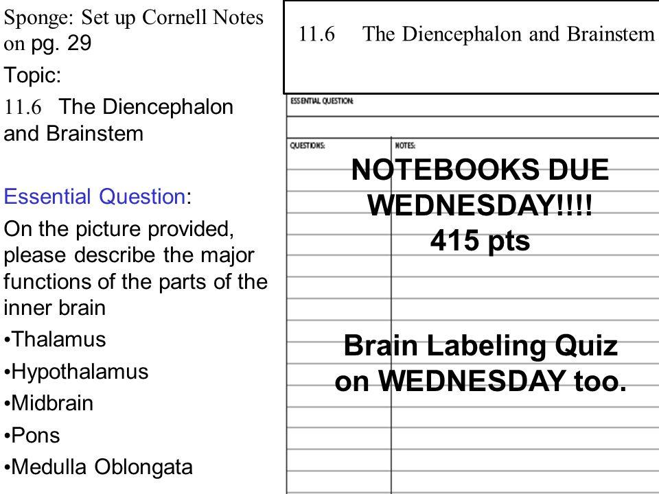 2 Diencephalon located between cerebral hemispheres and above the brainstem