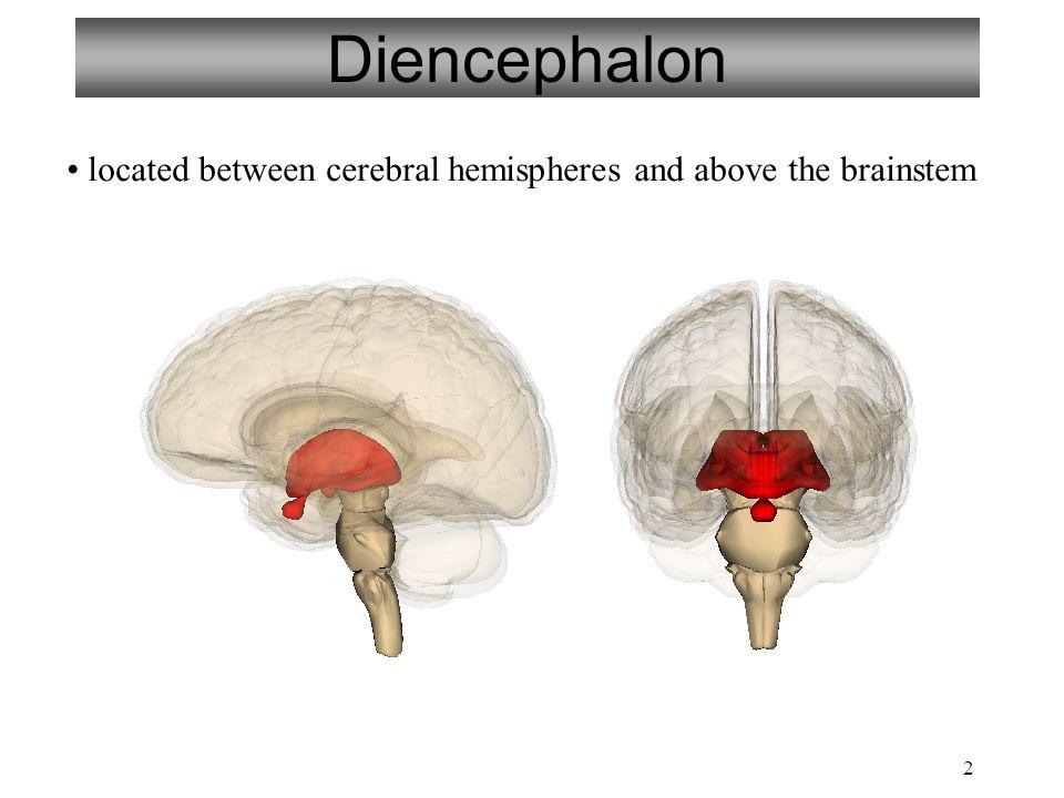 3 Diencephalon Thalamus Hypothalamus