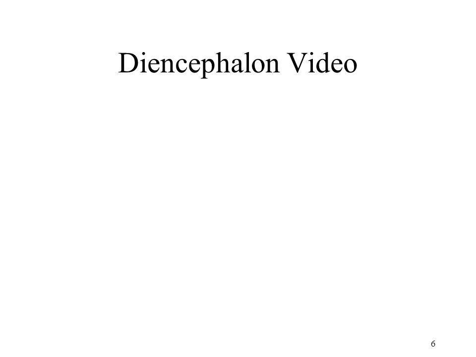 Diencephalon Video 6