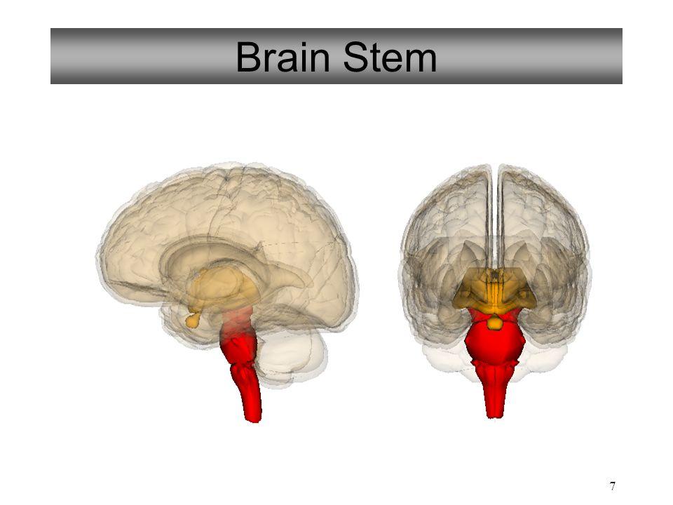 Pg. 28 The Brainstem Midbrain Pons Medulla Oblongata