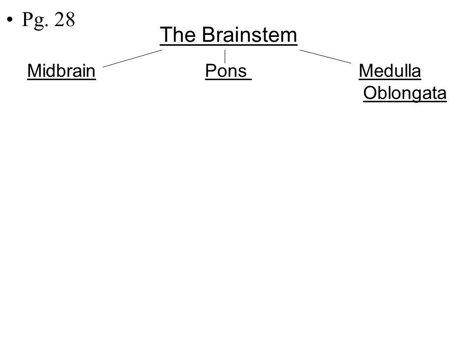 9 Brain Stem Three Parts 1.Midbrain Pons Medulla Oblongata Please get out 3 colors Color code picture to match notes