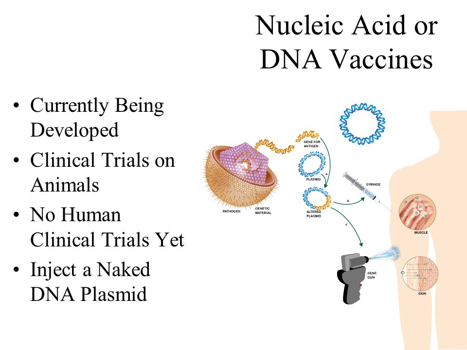 Nucleic Acid or DNA Vaccines Currently Being Developed Clinical Trials on Animals No Human Clinical Trials Yet Inject a Naked DNA Plasmid