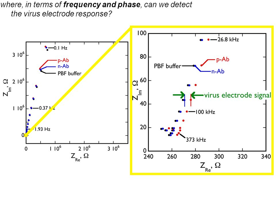 where, in terms of frequency and phase, can we detect the virus electrode response?
