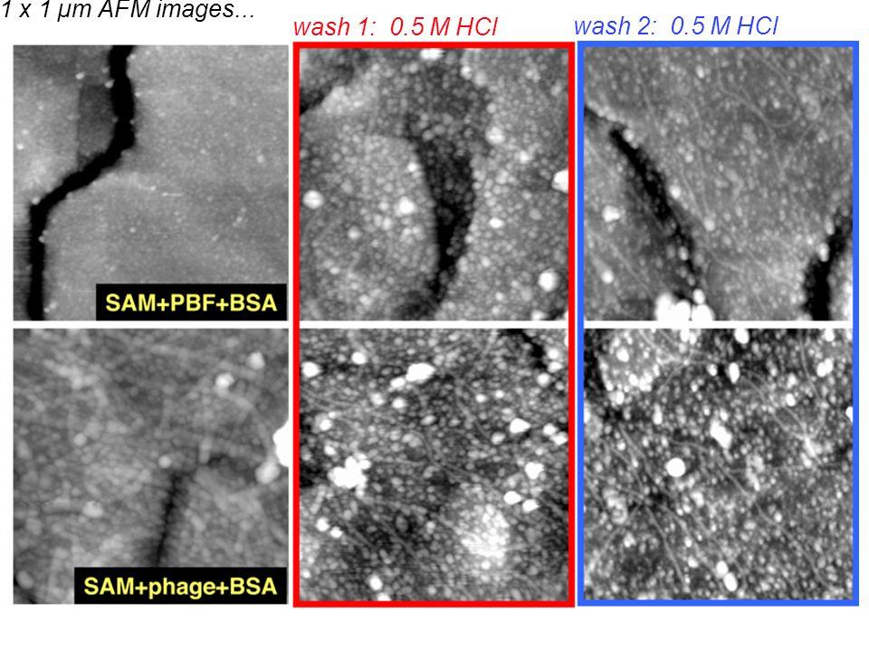 wash 1: 0.5 M HCl wash 2: 0.5 M HCl 1 x 1 µm AFM images...
