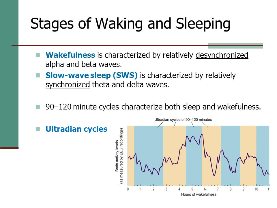 16 Stages of Waking and Sleeping Wakefulness is characterized by relatively desynchronized alpha and beta waves.