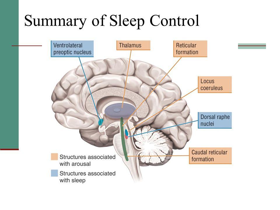 Summary of Sleep Control