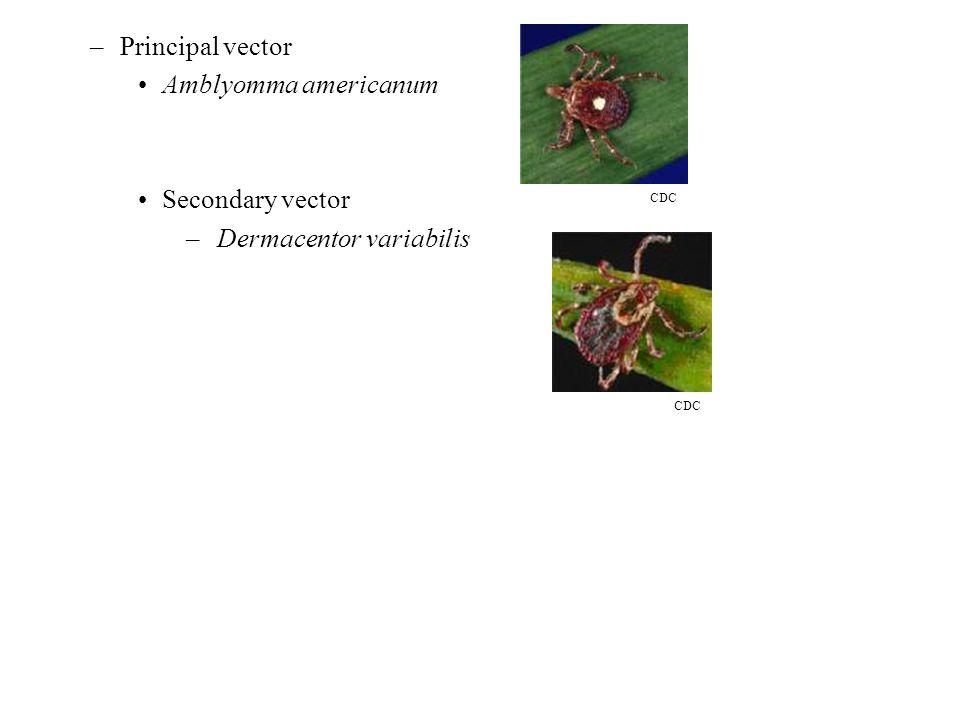 –Principal vector Amblyomma americanum Secondary vector – Dermacentor variabilis CDC