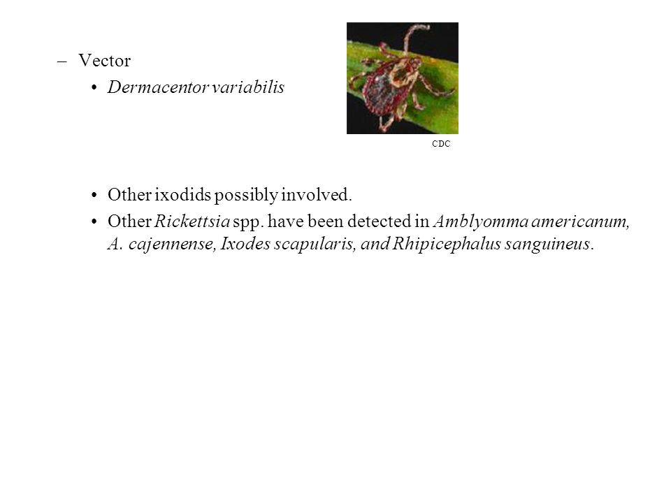 –Vector Dermacentor variabilis Other ixodids possibly involved. Other Rickettsia spp. have been detected in Amblyomma americanum, A. cajennense, Ixode