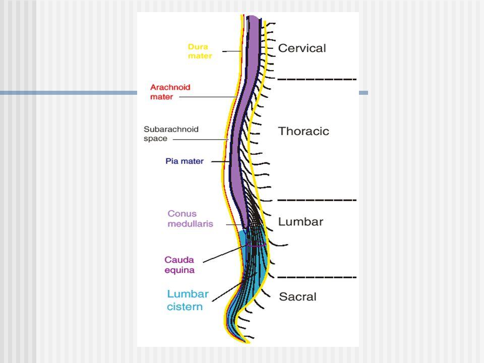 Gross Anatomy of the CNS