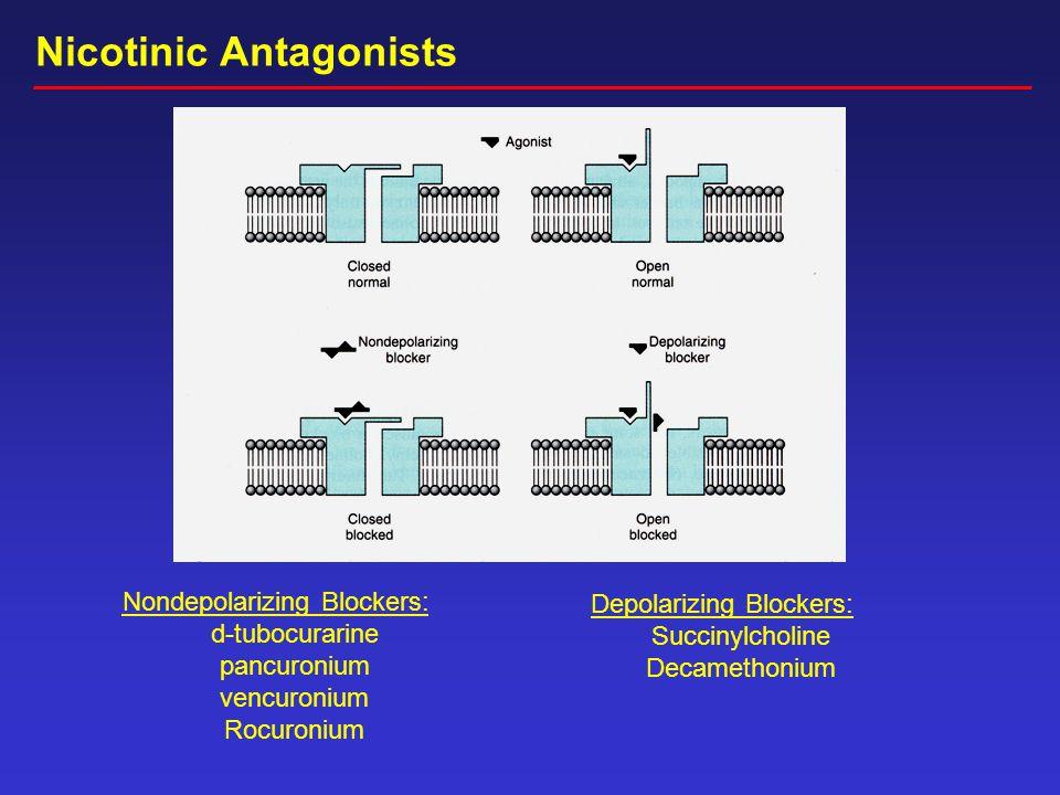 Nondepolarizing Blockers: d-tubocurarine pancuronium vencuronium Rocuronium Depolarizing Blockers: Succinylcholine Decamethonium Nicotinic Antagonists