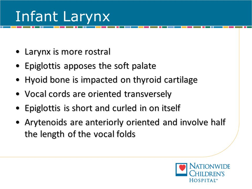 Infant Larynx Larynx is more rostralLarynx is more rostral Epiglottis apposes the soft palateEpiglottis apposes the soft palate Hyoid bone is impacted