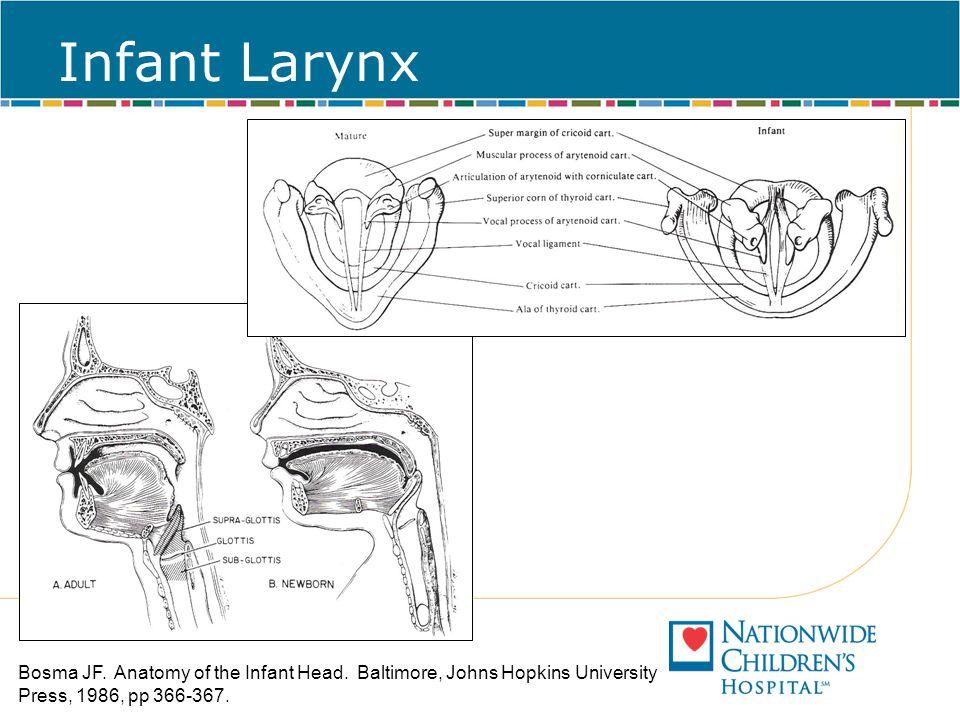 Infant Larynx Bosma JF. Anatomy of the Infant Head. Baltimore, Johns Hopkins University Press, 1986, pp 366-367.
