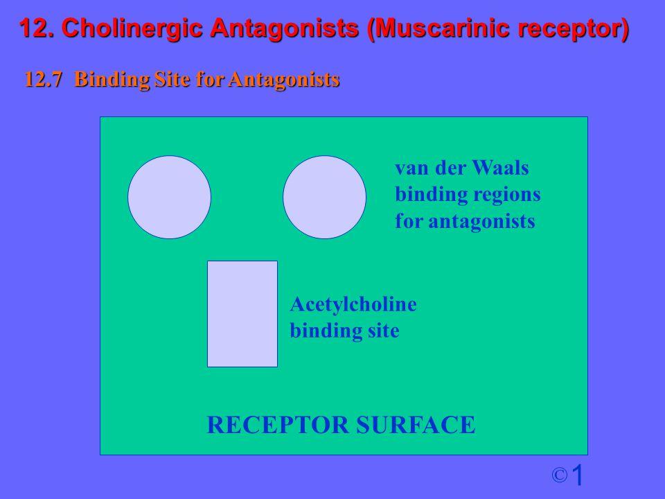 1 © RECEPTOR SURFACE Acetylcholine binding site 12.7 Binding Site for Antagonists van der Waals binding regions for antagonists 12. Cholinergic Antago