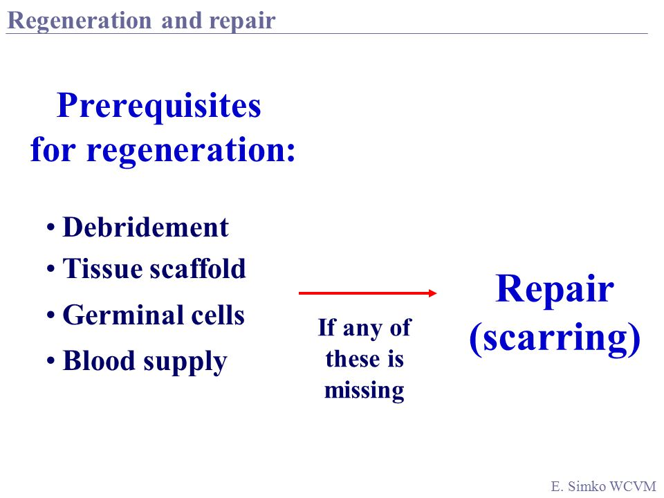 Regeneration Repair Both function & structure are re-established COMPLETELY Function & structure are re-established ONLY PARTIALLY (due to fibrosis) Tissue injury loss of function and structure E.