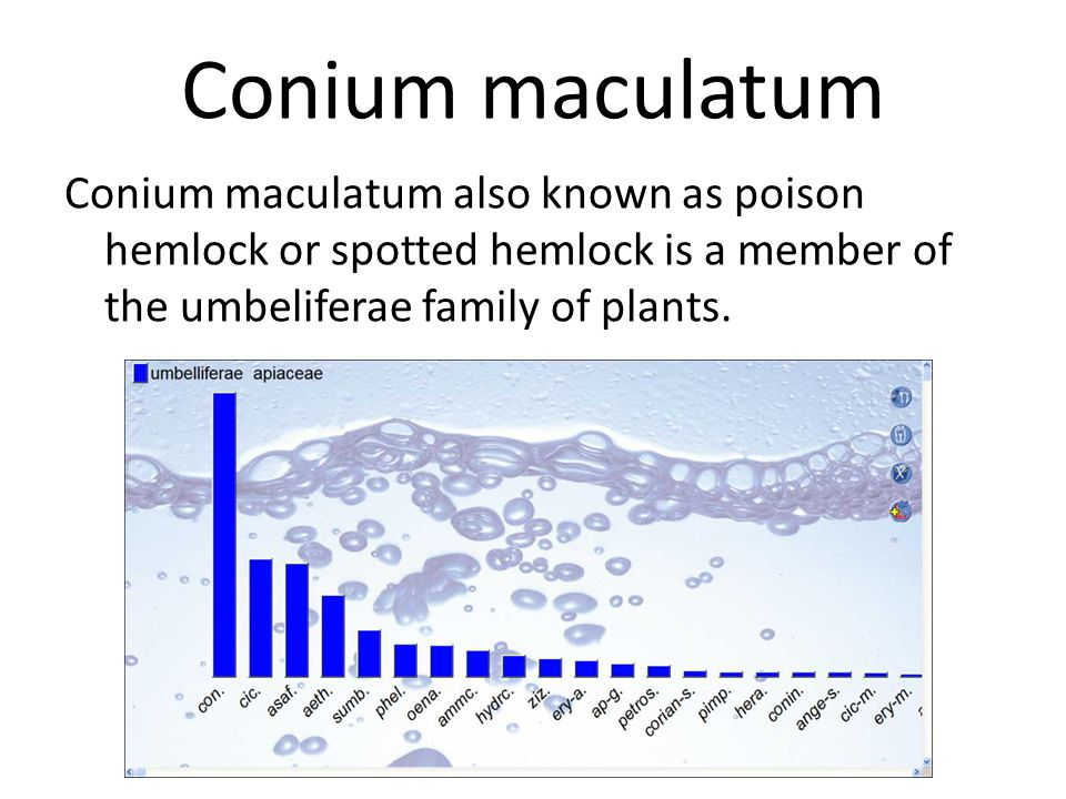 Conium maculatum The problem from lack of sex will usually start with vertigo & then go to trembling & weakness.