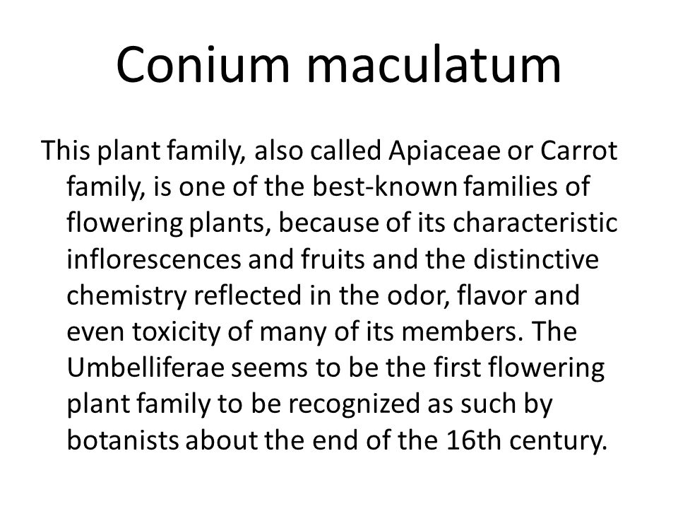 Conium maculatum As the action increases, other and more vital organs are involved.