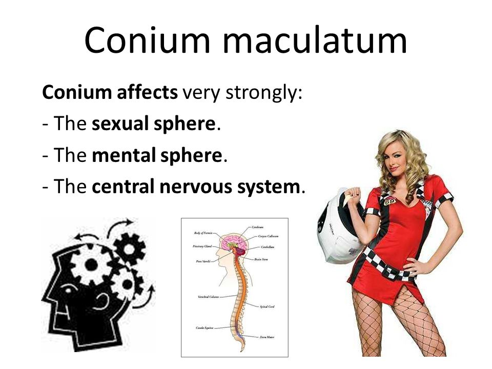 Conium maculatum The major idea of Conium maculatum is sclerosis, of becoming hard, especially the glands, which become swollen and indurated.