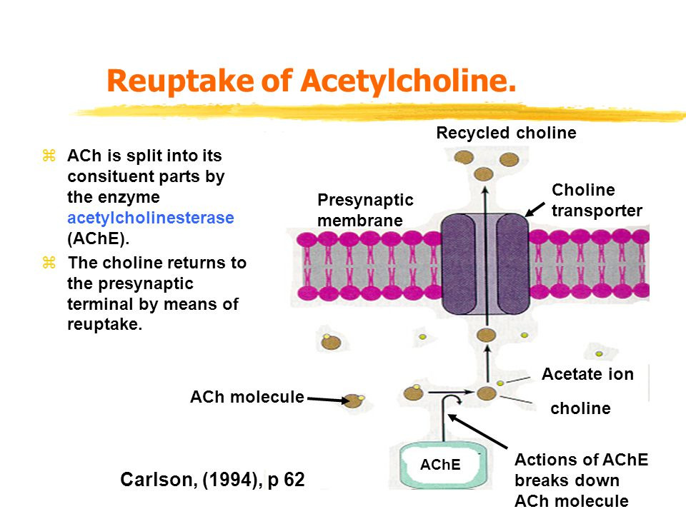 Reuptake of Acetylcholine.