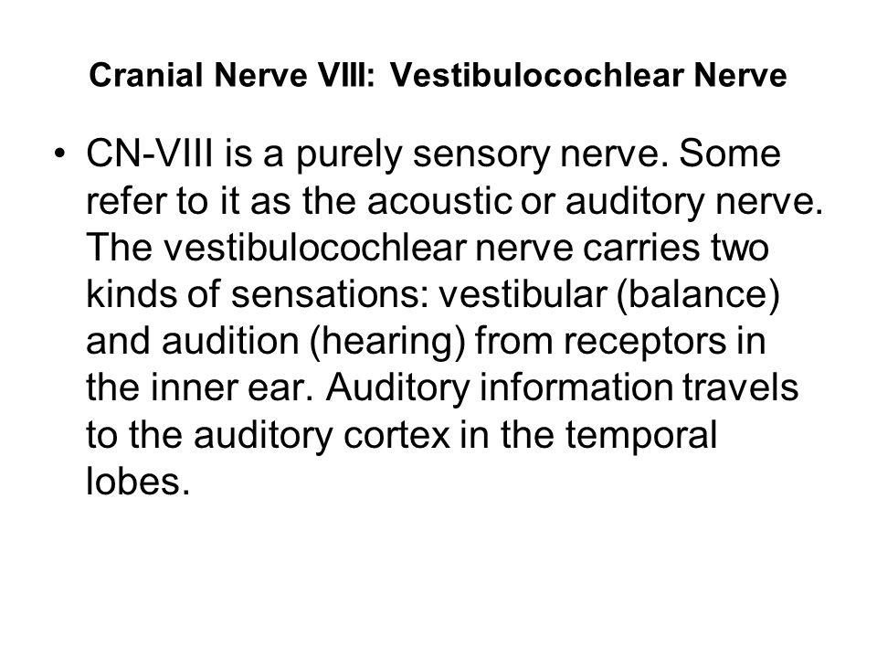 Cranial Nerve VIII: Vestibulocochlear Nerve CN-VIII is a purely sensory nerve.
