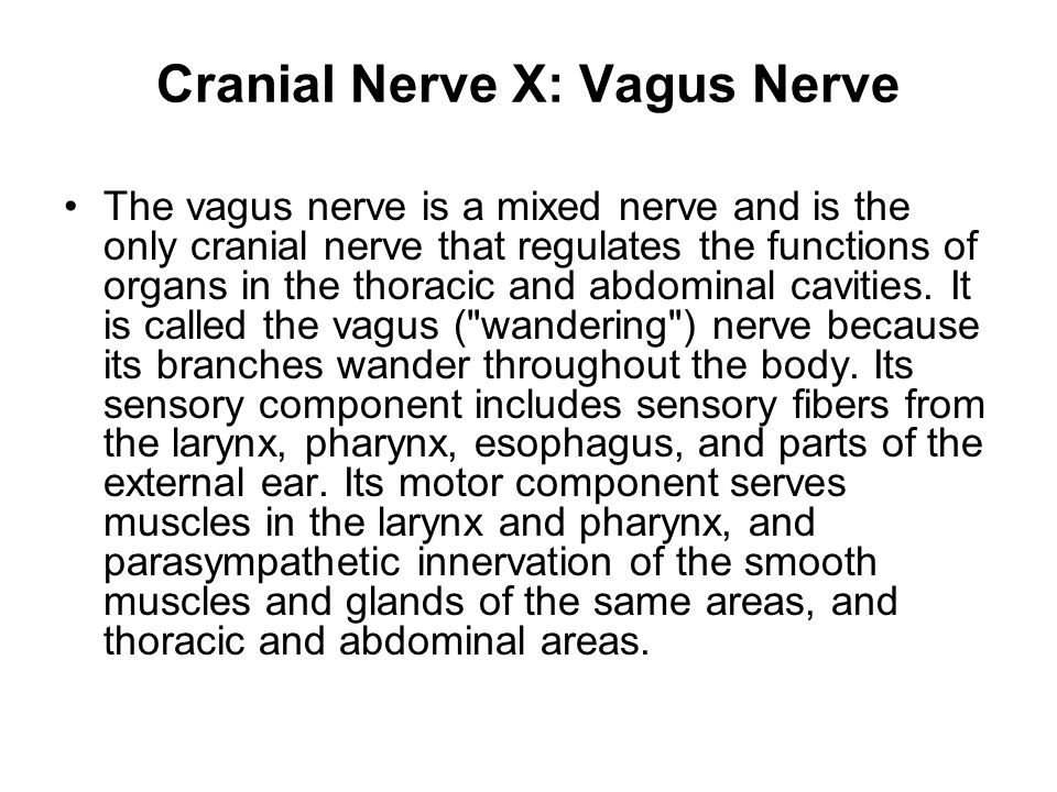 Cranial Nerve X: Vagus Nerve The vagus nerve is a mixed nerve and is the only cranial nerve that regulates the functions of organs in the thoracic and