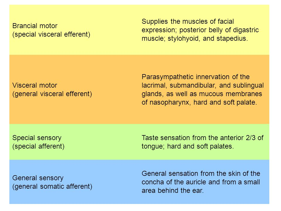 Brancial motor (special visceral efferent) Supplies the muscles of facial expression; posterior belly of digastric muscle; stylohyoid, and stapedius.