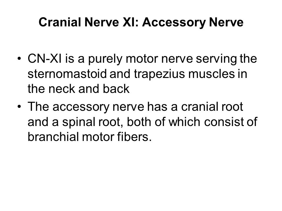 Cranial Nerve XI: Accessory Nerve CN-XI is a purely motor nerve serving the sternomastoid and trapezius muscles in the neck and back The accessory ner