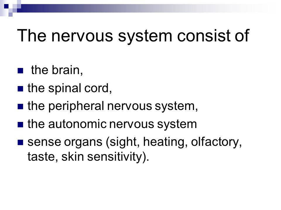 The nervous system consist of the brain, the spinal cord, the peripheral nervous system, the autonomic nervous system sense organs (sight, heating, olfactory, taste, skin sensitivity).