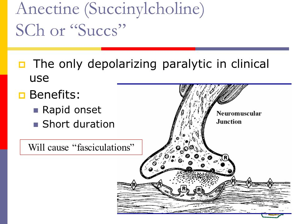 Anectine (Succinylcholine) SCh or Succs  The only depolarizing paralytic in clinical use  Benefits: Rapid onset Short duration Will cause fasciculations
