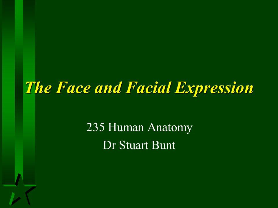 Lymphatic Drainage H Maxillary and anterior mandibular region –Ant.