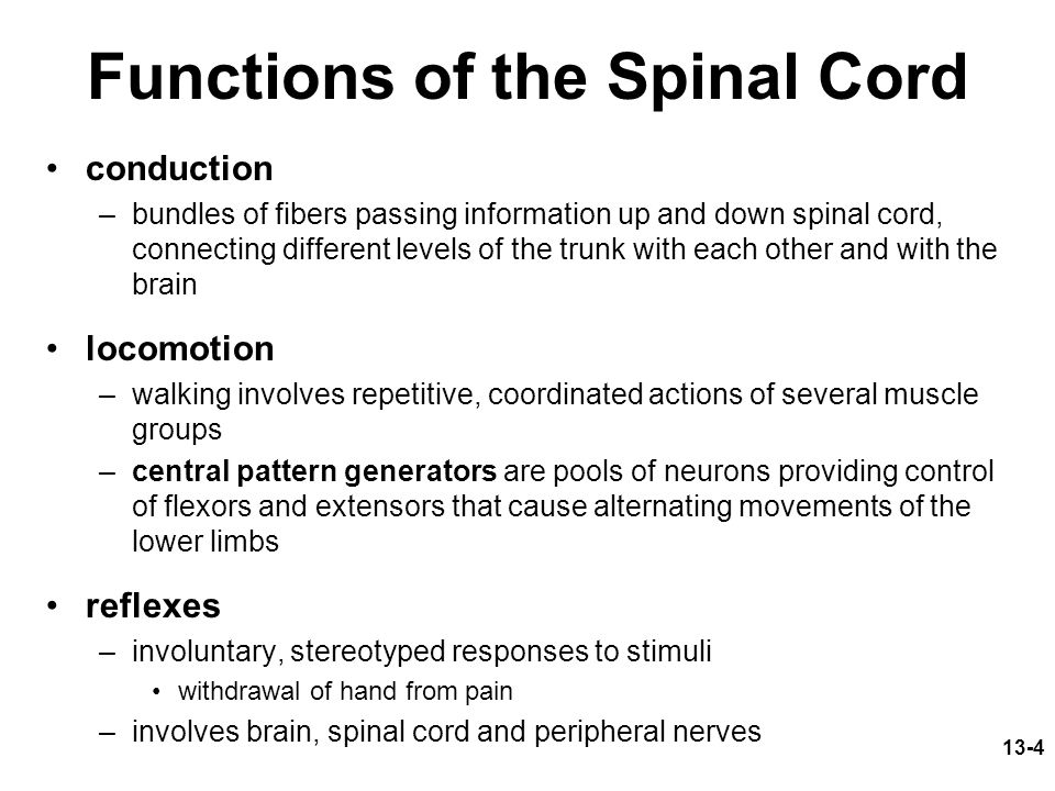13-4 Functions of the Spinal Cord conduction –bundles of fibers passing information up and down spinal cord, connecting different levels of the trunk