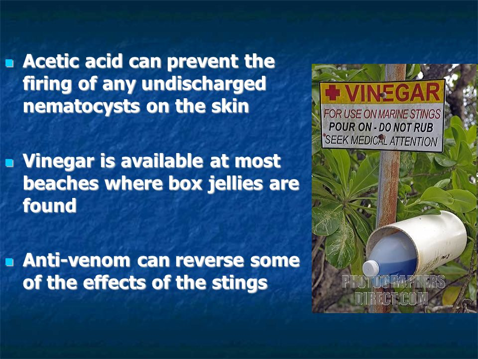 Acetic acid can prevent the firing of any undischarged nematocysts on the skin Acetic acid can prevent the firing of any undischarged nematocysts on the skin Vinegar is available at most beaches where box jellies are found Vinegar is available at most beaches where box jellies are found Anti-venom can reverse some of the effects of the stings Anti-venom can reverse some of the effects of the stings