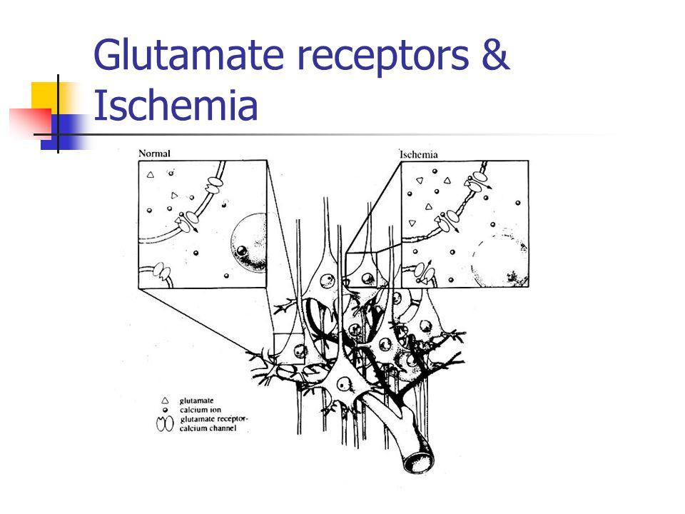 Glutamate receptors & Ischemia