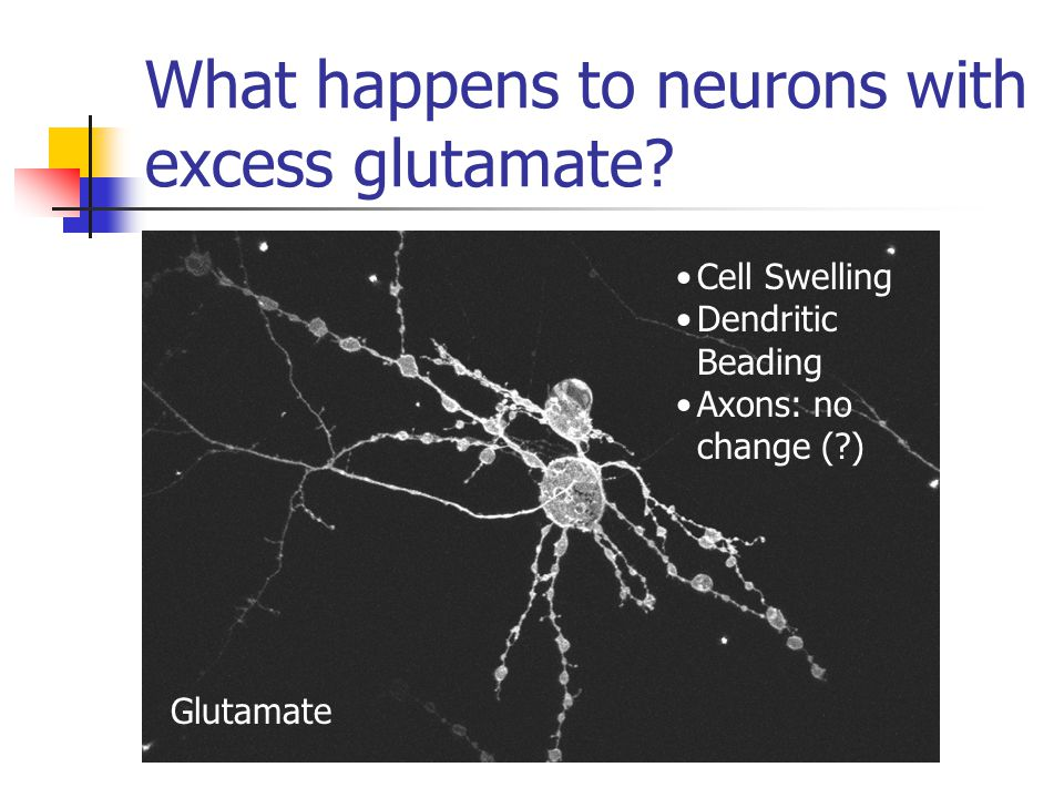 What happens to neurons with excess glutamate.