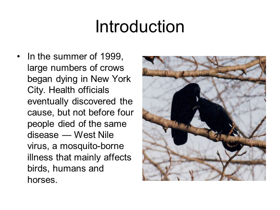 Introduction In the summer of 1999, large numbers of crows began dying in New York City.