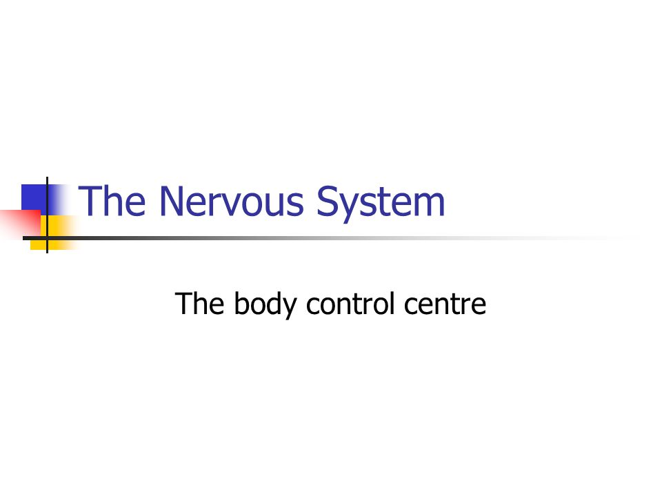 The Nervous System The body control centre