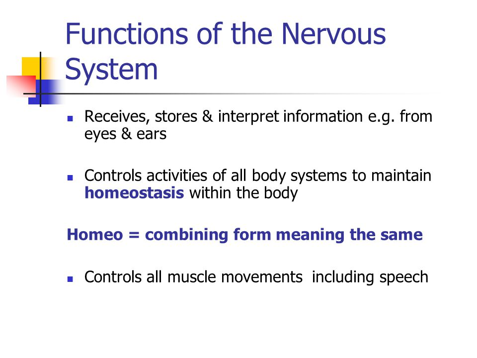 Functions of the Nervous System Receives, stores & interpret information e.g.