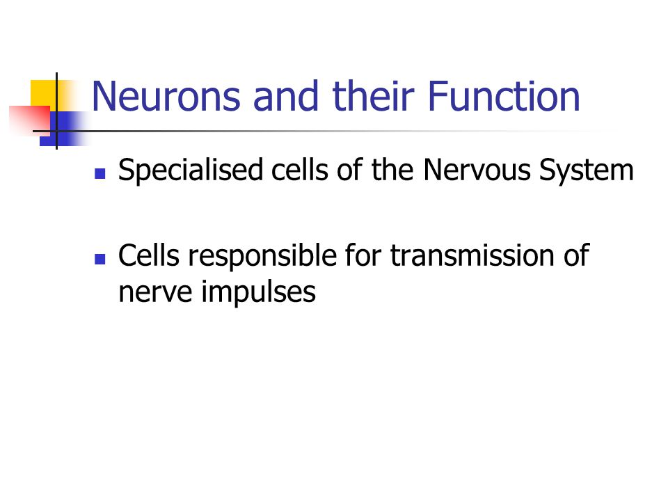 Neurons and their Function Specialised cells of the Nervous System Cells responsible for transmission of nerve impulses