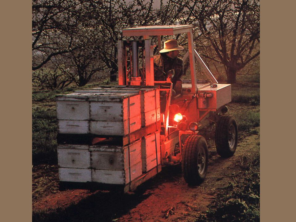 Organization of the beekeeping sector 4 The Israeli Beekeepers Association: Represents the beekeepers, supervises the modernization of beekeeping equipment and maintains contact with beekeeping organizations around the world.