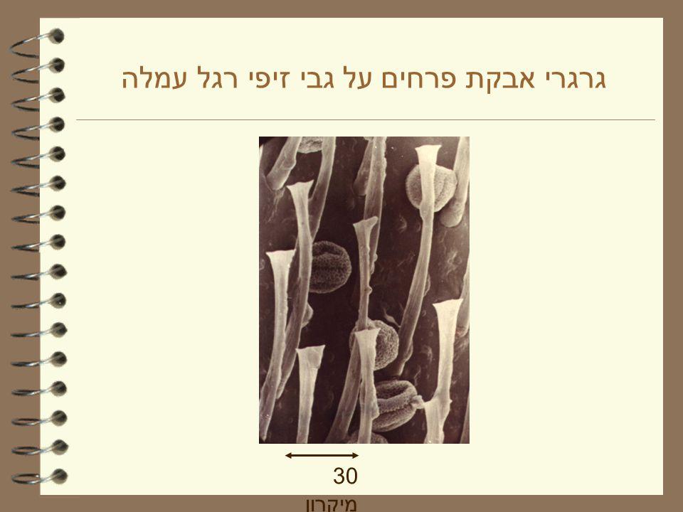 גרגרי אבקת פרחים בגודל בין 5 - 200 מיקרון