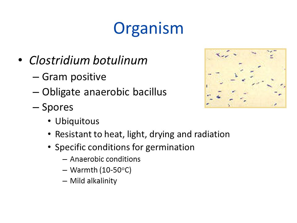 Organism Clostridium botulinum – Gram positive – Obligate anaerobic bacillus – Spores Ubiquitous Resistant to heat, light, drying and radiation Specific conditions for germination – Anaerobic conditions – Warmth (10-50 o C) – Mild alkalinity