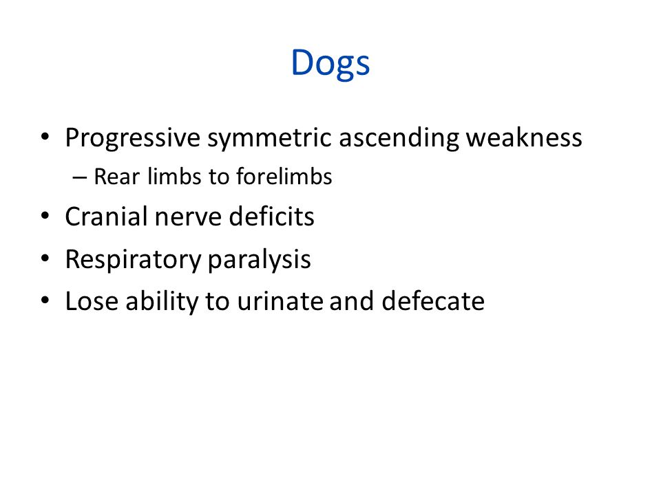 Dogs Progressive symmetric ascending weakness – Rear limbs to forelimbs Cranial nerve deficits Respiratory paralysis Lose ability to urinate and defecate