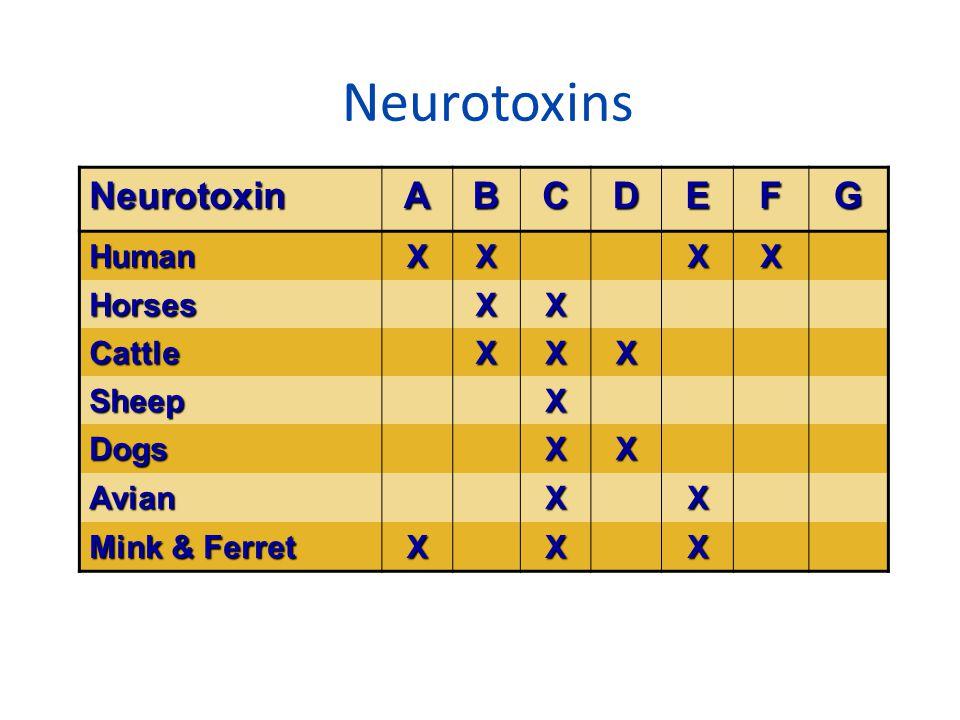 Neurotoxins NeurotoxinABCDEFG HumanXXXX HorsesXX CattleXXX SheepX DogsXX AvianXX Mink & Ferret XXX