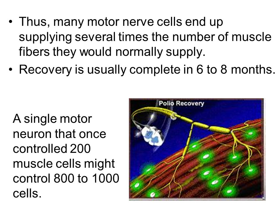 Thus, many motor nerve cells end up supplying several times the number of muscle fibers they would normally supply. Recovery is usually complete in 6
