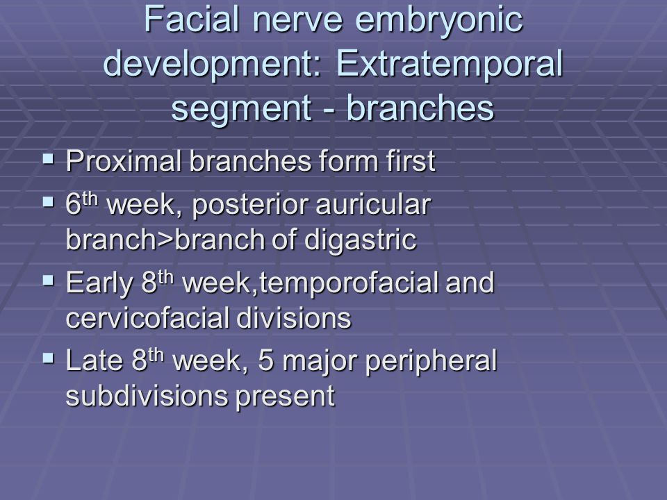 Facial nerve embryonic development: Extratemporal segment - branches  Proximal branches form first  6 th week, posterior auricular branch>branch of digastric  Early 8 th week,temporofacial and cervicofacial divisions  Late 8 th week, 5 major peripheral subdivisions present