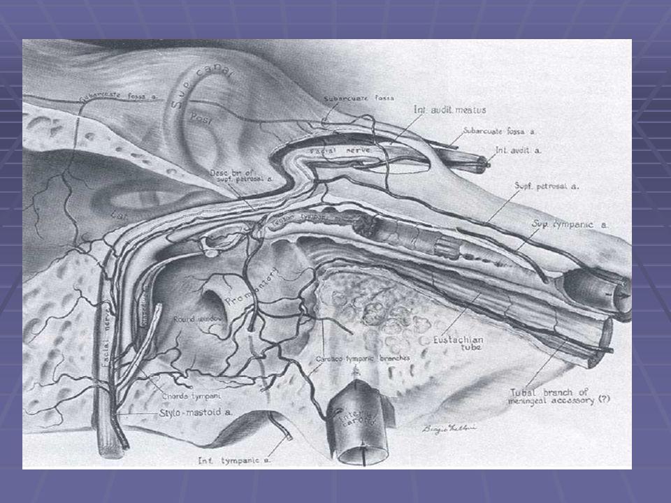 Nerve fiber components  Epineurium – nerve sheath; vasa nervorum  Perineurium – surrounds endoneural tubules; tensile strength, protects against infection  Endoneurium – surrounds axons, adherent to Schwann layer, endoneural tubules regeneration