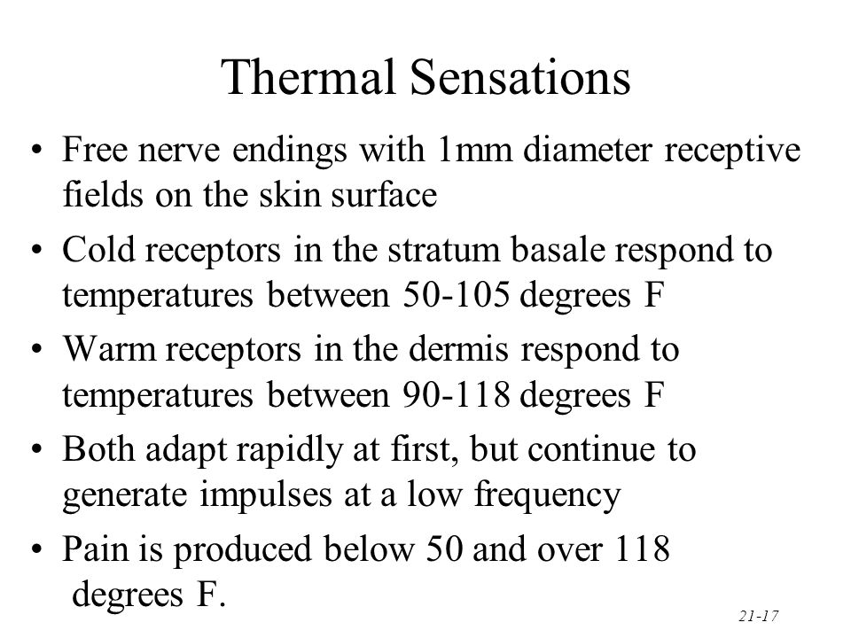 21-17 Thermal Sensations Free nerve endings with 1mm diameter receptive fields on the skin surface Cold receptors in the stratum basale respond to tem