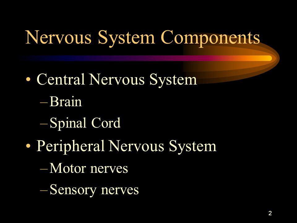 2 Nervous System Components Central Nervous System –Brain –Spinal Cord Peripheral Nervous System –Motor nerves –Sensory nerves